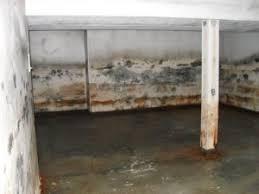 mold remediation earth safe environmental