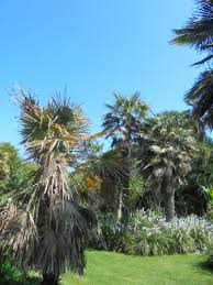 Ventnor Botanic Gardens Ventnor Botanic Garden 2018 All You Need To Before You Go