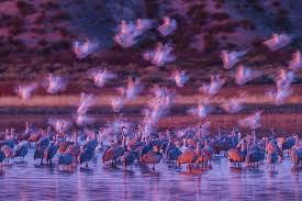 Light Headed In The Morning Wildlife Photographer Of The Year People U0027s Choice Bbc News