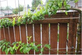 vertical gardening with concrete wire mesh grow u0026 resist