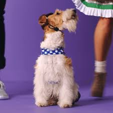 Target Dog Halloween Costumes Target Gifs U0026 Share Giphy