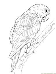 parrot bird coloring pages peacock bird coloring pages within