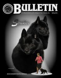 belgian sheepdog club of america national specialty schipperke club of america