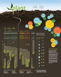 seriously great infographic with loads of planting tips for your