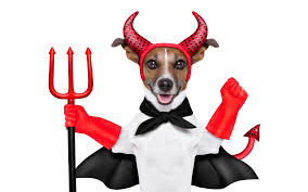 halloween pet background picture animals jack russell terrier dogs trident devil 9187x5742