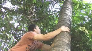 how to climb a coconut tree filipino survival guide youtube