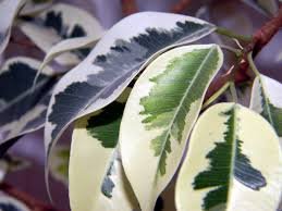 free images tree nature branch leaf foliage green produce
