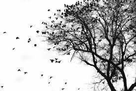 tree birds black image 467358 on favim com