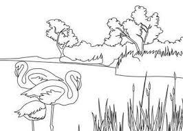 mewarnai gambar tanaman dan hewan mewarnai gambar