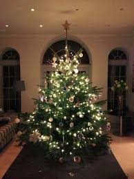 What Trees Are Christmas Trees - how to pick the perfect christmas tree from the men who picked