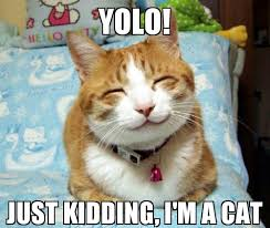 Yolo Meme - yolo cat meme by thedawn2009 memedroid
