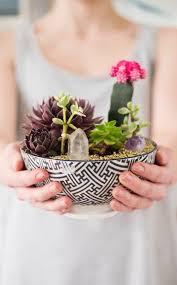 succulent care u2013 like synthetics are succulents u2013 fresh design pedia
