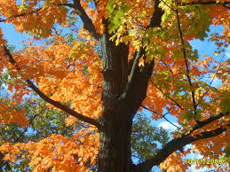 fall colors michigan wyandotte trenton trees town