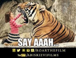 Tiger Meme - 28 best roar memes images on pinterest meme memes and cute tigers