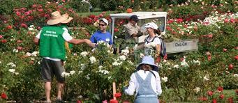 friends of the san jose rose garden