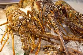 The Ten Best Seafood Restaurants In Miami Miami New Times Garcia U0027s Seafood Grille U0026 Fish Market Miami River Florida