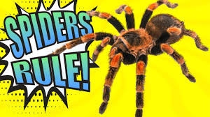 spiders educational video for kids youtube