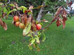 Judge A Tree By Its Fruit - tree disease treatment tree disease diagnosis fungus