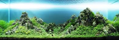 Most Beautiful Aquascapes Aga Aquascaping Contest Delivers Stunning Freshwater Views News