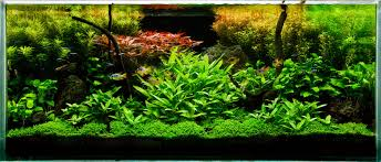 Aquarium Tropical Plants Planted Aquarium U2013 Aishwarya Pets