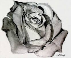 photos sketches of roses drawing art gallery