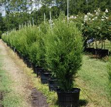 florida native nursery plant city fl locate u0026 find wholesale plants plantant com