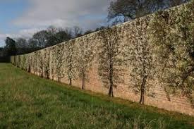 gordon castle walled garden restoration nears completion