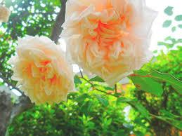 beautiful cute flower flowers garden gardening image 53554