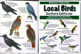 California birds images Southern california birds yahoo image search results southern jpg