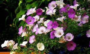 plants that don t need sunlight to grow 5 winter plants to grow at home mygubbi