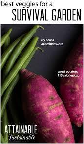 2779 best backyard vegetable and fruit gardening images on