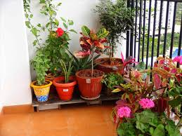 Plants For Patio by Apartment Patio Plants Darxxidecom