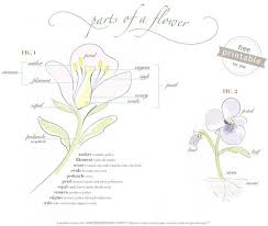 Part Of Flowers - best 20 flower parts ideas on pinterest parts of a flower