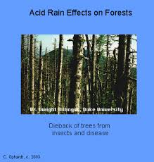 acid effects forests