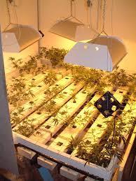 Hps Lights Weed Shroom Grow Room Diy And Home Improvement Shroomery