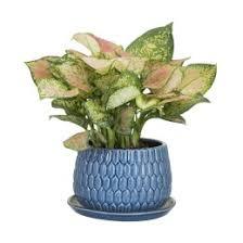 indoor plants india indoor plants buy indoor plants online in india buy 1000 plants