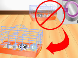 Cages For Guinea Pigs How To Clean A Guinea Pig Cage With Pictures Wikihow