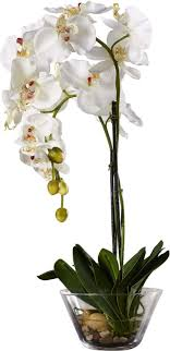 white orchids phalaenopsis silk white orchid in glass vase reviews allmodern
