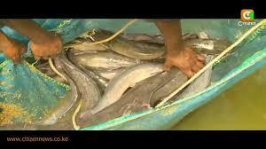 smart farm fish farming youtube