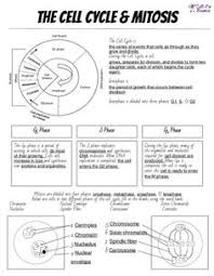 Mitosis And The Cell Cycle Worksheet Cumulative Topic 3 Mitosis Teaching Cycling
