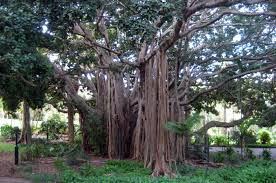 City Botanic Gardens Park Brisbane Brisbane