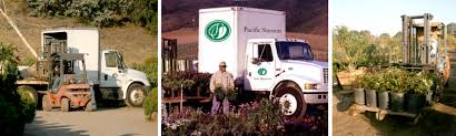 Plant Delivery Order 750 Or More Online For Free Plant Delivery Pacific Nurseries