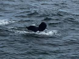 wild whales hyannis cape cod gina pacelli