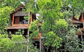 wayanad tree house stay experience thrillophilia