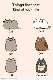 Pusheen The Cat Meme - the 25 best pusheen cat ideas on pinterest pusheen pusheen