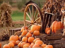 thanksgiving wallpapers pumpkin thanksgiving blessings