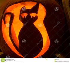 halloween cat pic halloween cat pumpkin royalty free stock photo image 3579645