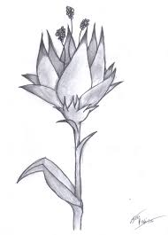 simple flower drawings in pencil 10 best images about flower