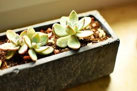 5 common reasons why houseplants die and how to save them diy