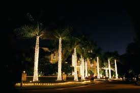 palm tree lighting palm trees wrapped with lights on fronds palm